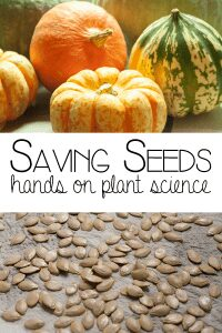 Saving Seeds hands on plant science for autumn and fall