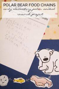 Polar Bear Food Chains