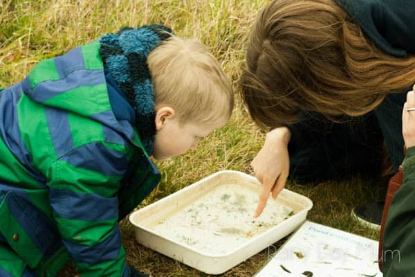 How to go pond dipping - one of the fabulous ideas from the book Born to Be Wild connecting Families and with Nature through hundreds of activities to do outside year round.