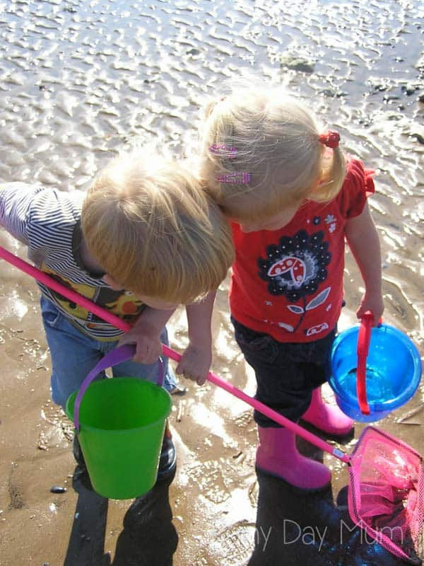 kids exploring the rock and tide pools on the beach with nets and buckets