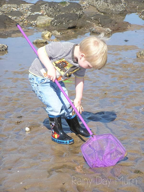 Tips for rock pooling with toddlers and preschoolers