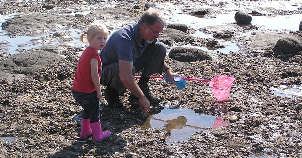 toddler and grandfather on the rocks exposed by the tide looking in the rock pools to find some interesting creatures