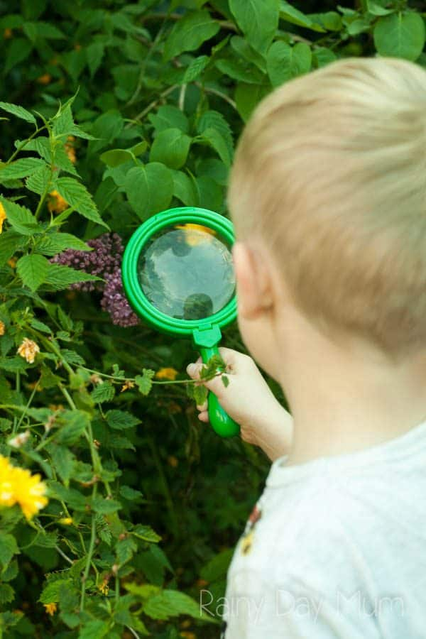 boy using a magnifying glass to examining the flowers on a lilac in bloom