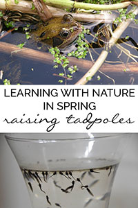 How to raise frogs from frogspawn