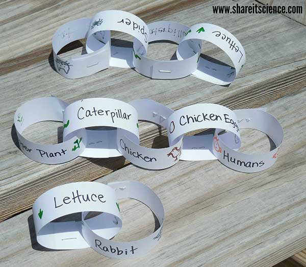 Paper Chain Food Chain for your Garden