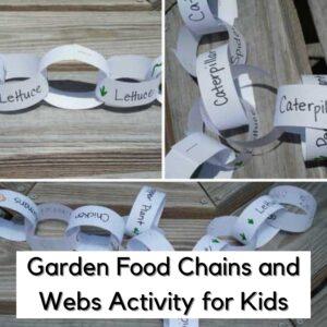 Garden Food Chain Activity for Kids