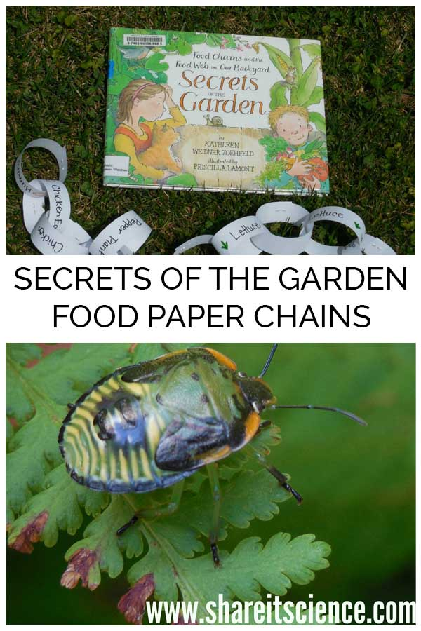 Secrets of the Garden: A Food Chain Activity