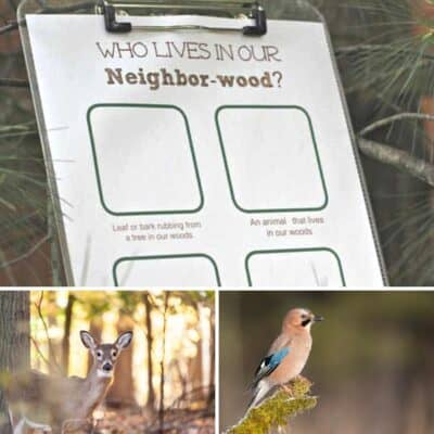 FREE Printable Forest Scavenger Hunt Activity Sheet to complete with toddlers and preschoolers