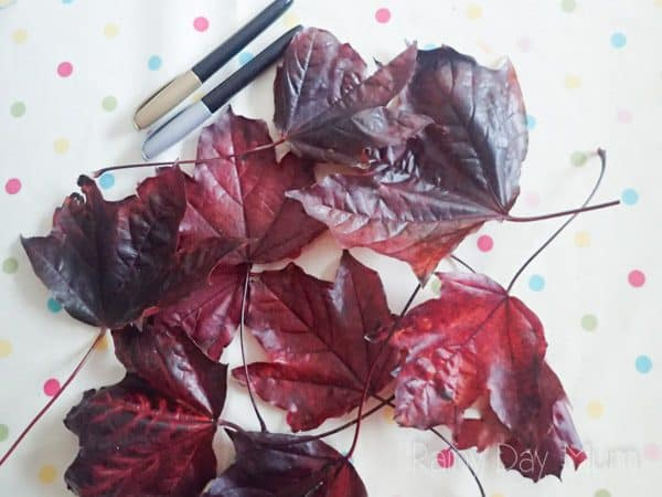 colourful autumn leaves with pens on a spotty table cloth