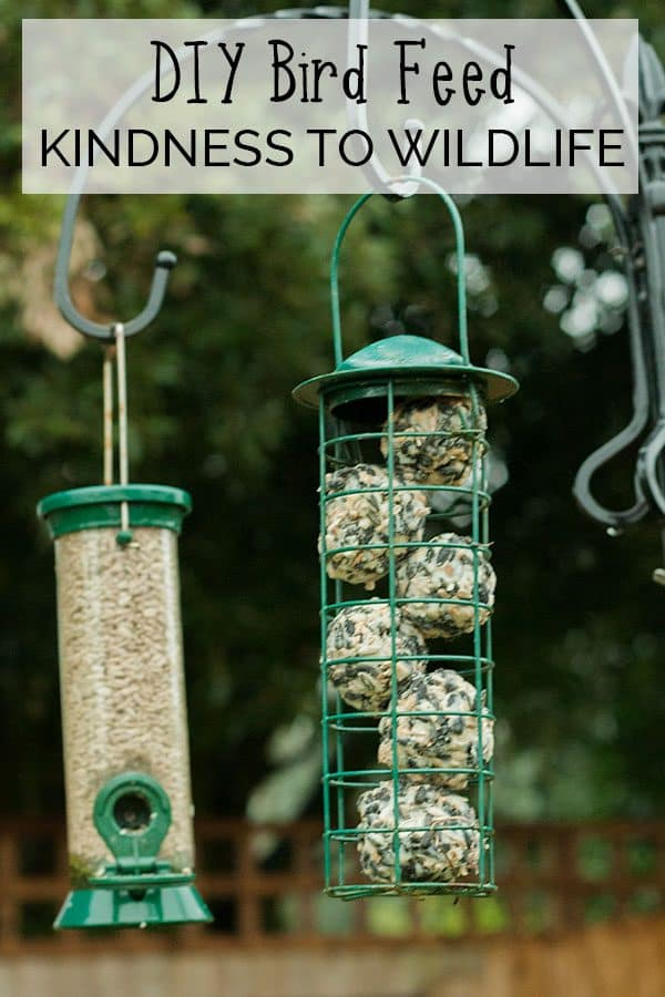 DIY Bird Feed