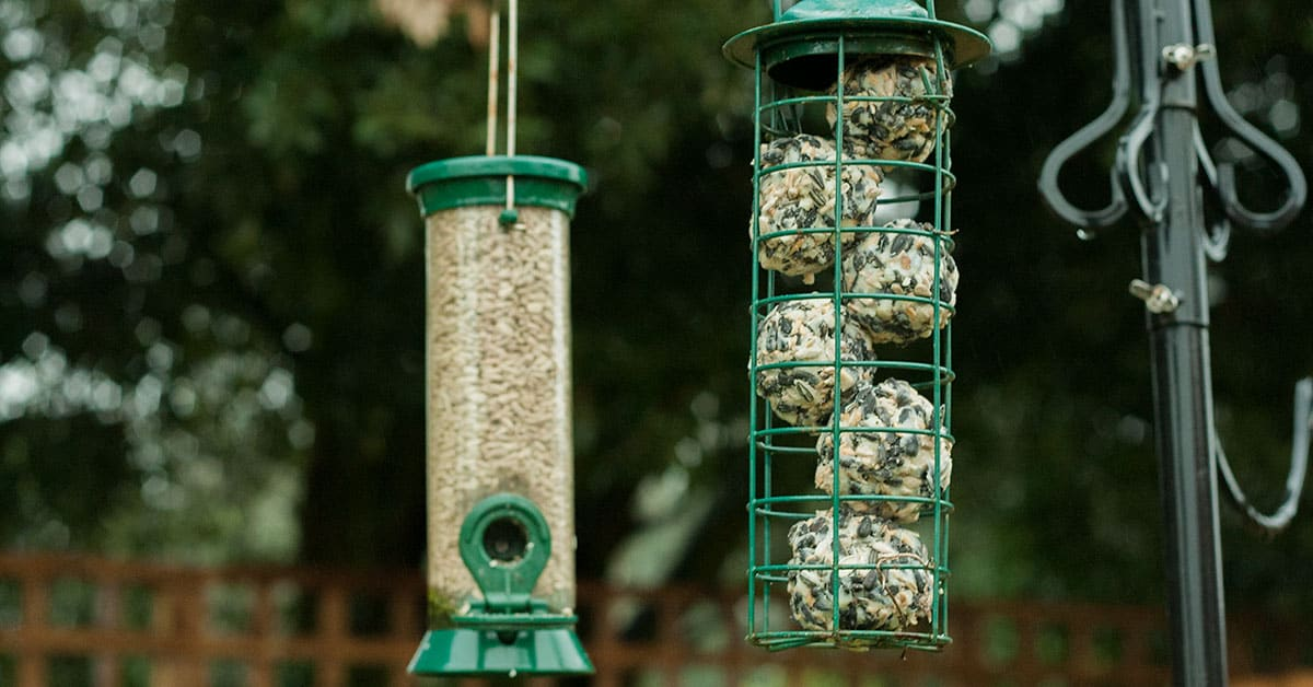 How To Make Your Own Bird Feed Suet Balls
