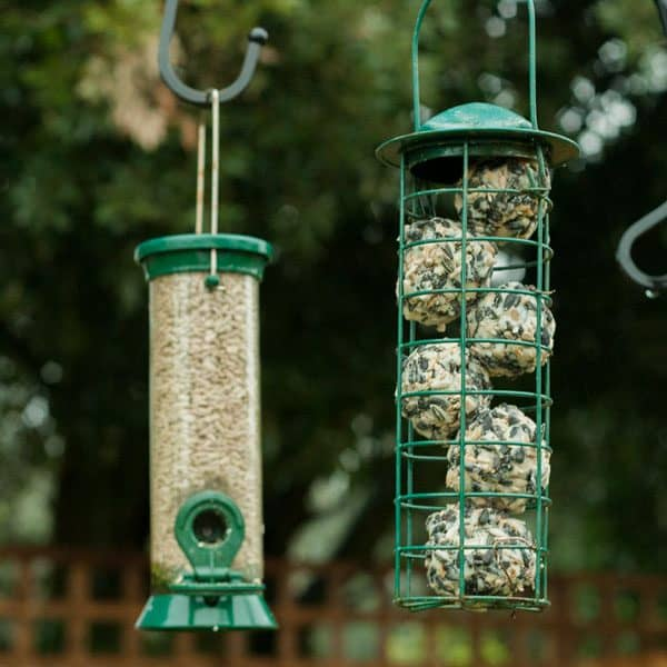 Step by step guide to making suet balls with kids, a fun and essential winter wildlife activity for nature study and kindness challenges.