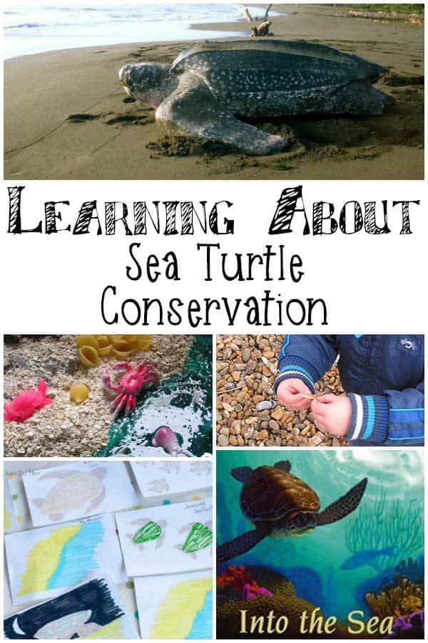 Learning about Sea Turtle Conservation with Kids