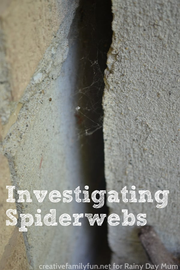 Investigating Spider Webs