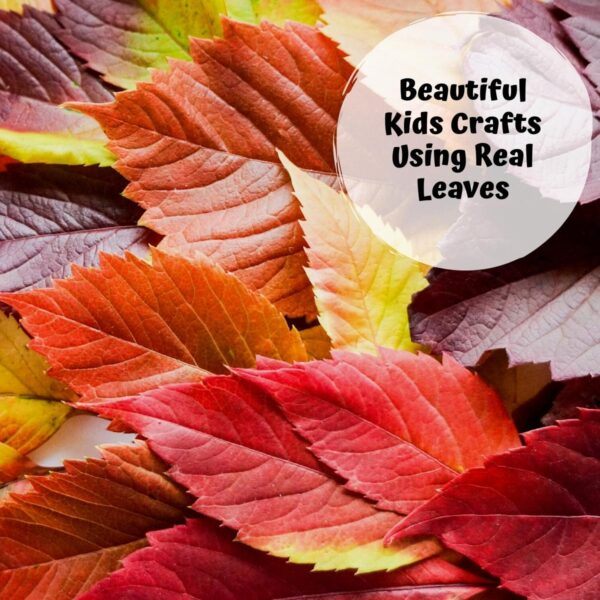 collection of autumn leaves with a text overlay reading beautiful kids crafts using real leaves