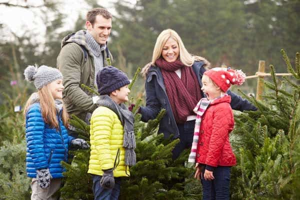 family picking a Christmas Tree from the farm