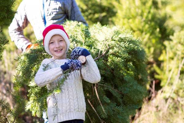 Top tips to help your choose your family's real Christmas Tree this year avoid these common mistakes.
