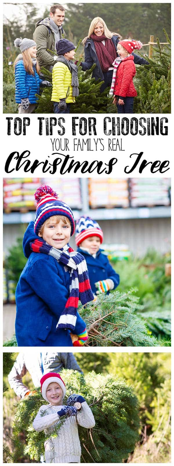 Top tips to help you choose your family's real Christmas Tree. Avoid these common mistakes that we made and make this part of your Countdown to Christmas.
