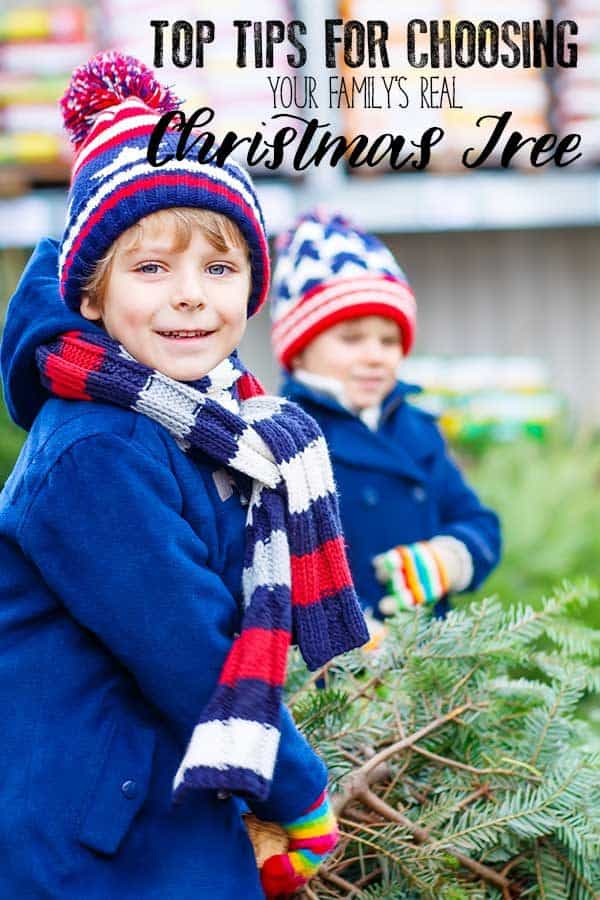 Top Tips for Choosing Your Family's Real Christmas Tree