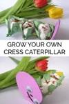 Growing Cress Caterpillars with Preschoolers