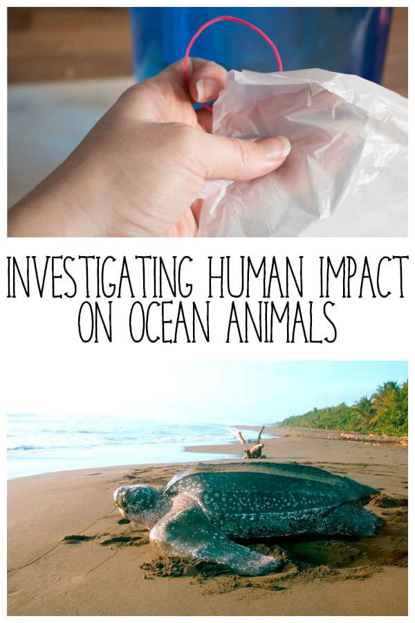 Investigating the Impact of Humans on Ocean Animals – Plastic Bag Jellyfish
