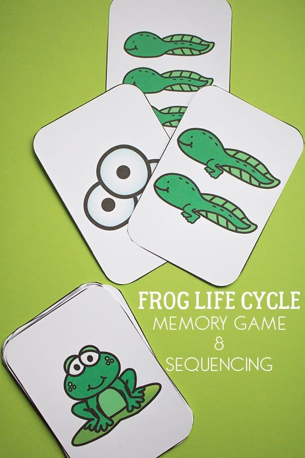 Frog Life Cycle Memory Game