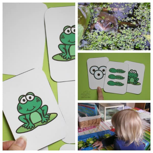 Printable Frog Life Cycle Game that can be used as a memory game, to play snap or to teach the life cycle of the frog through a simple sequencing activity. Simply download, print and play.