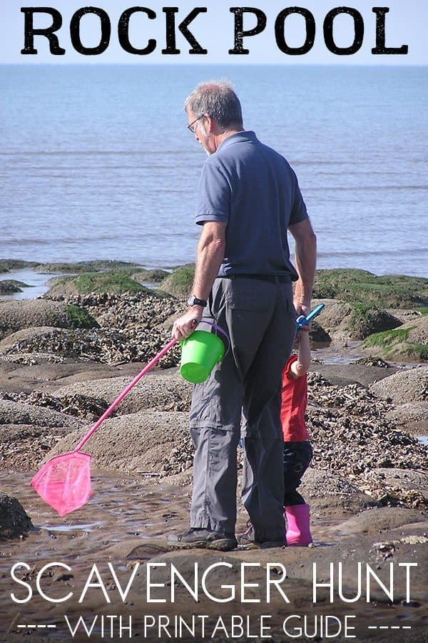 Rock pool scavenger hunt with mini guide for kids
