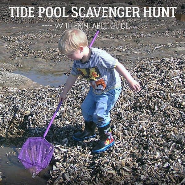 Free mini guide for a nature scavenger hunt on the rocky shore this summer