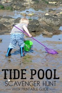 Tide Pool Scavenger Hunt for Kids