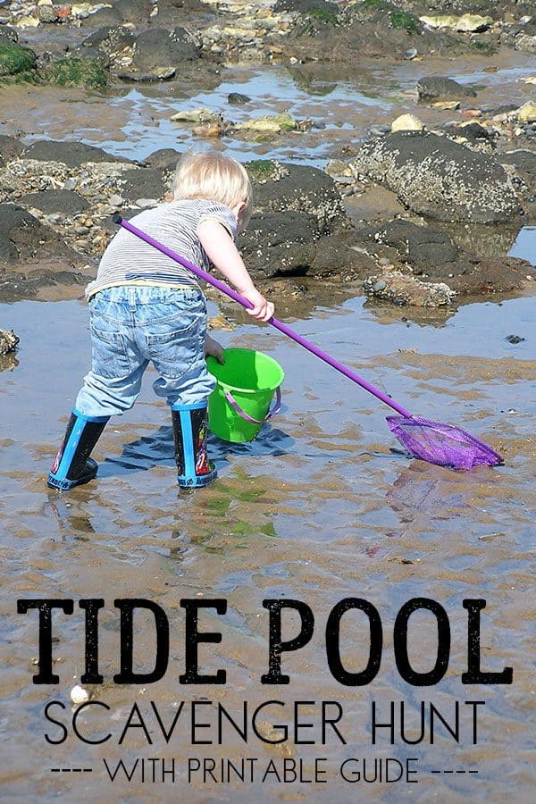What to Find in a Tide Pool – Scavenger Hunt Guide for Kids
