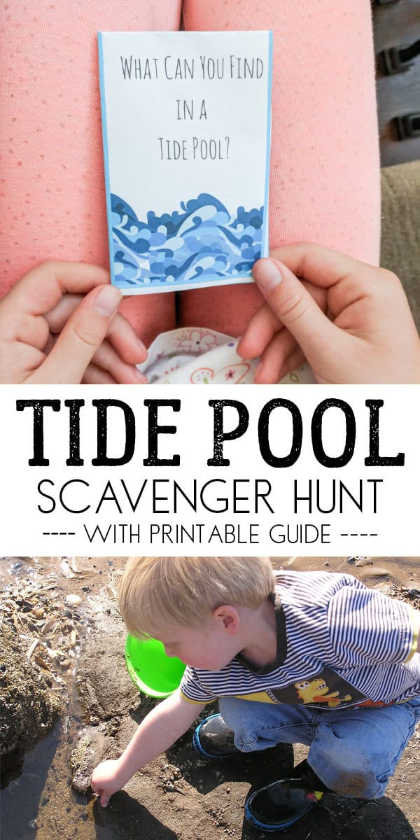 What can you find in the tide pools - a nature scavenger hunt for the rocky shore for kids. Includes a free printable mini guide.