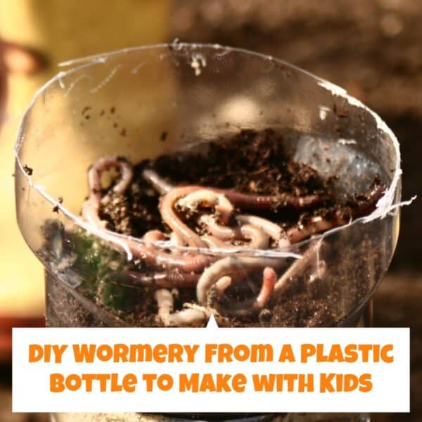 DIY Wormery from a plastic bottle to make with kids