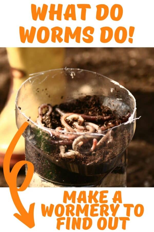 Pinterest image for a What do Worms do DIY summer science activity for kids
