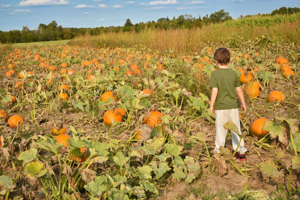 Child choosing his own pumpkin from the pumpkin patch at the farm
