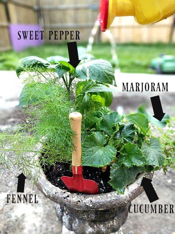 simple garden varieties to grow with kids