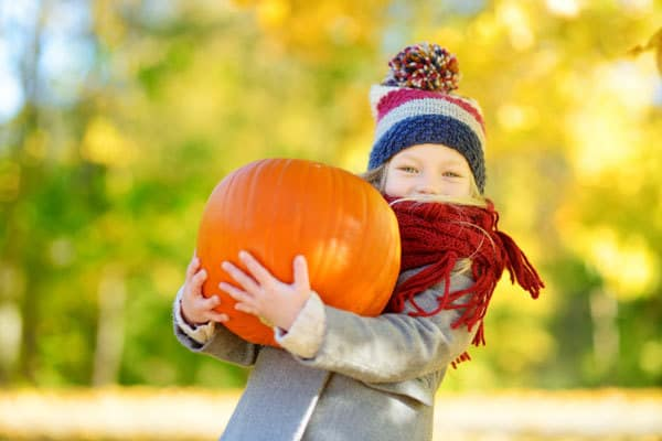 Girl picking her own Halloween Pumpkin from the farm