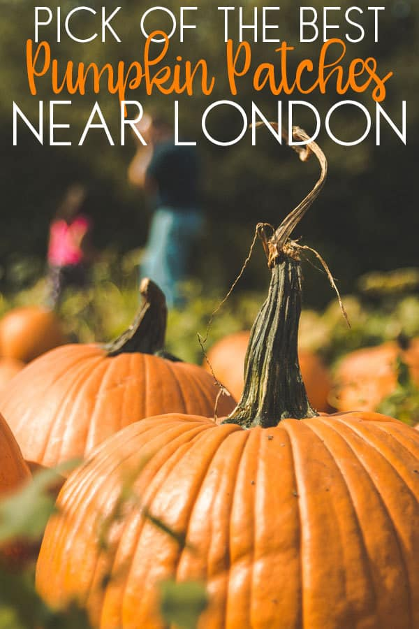 Where to Find Pumpkin Patches Near London