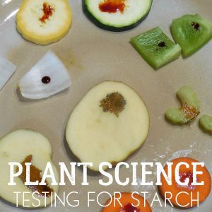 What's in your Vegetables for Vegetable Soup? Plant Science Experiment for Kids