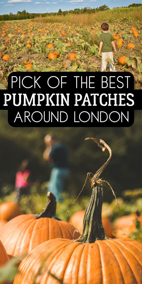 Pick of the crop - the best places to go with kids to pick your own pumpkin within an hour of London ideal for Autumn Family Fun