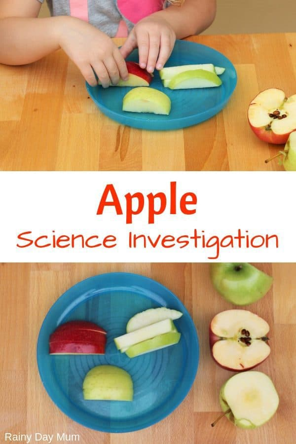 Simple Preschool Apple Science Investigation Using the 5 Senses