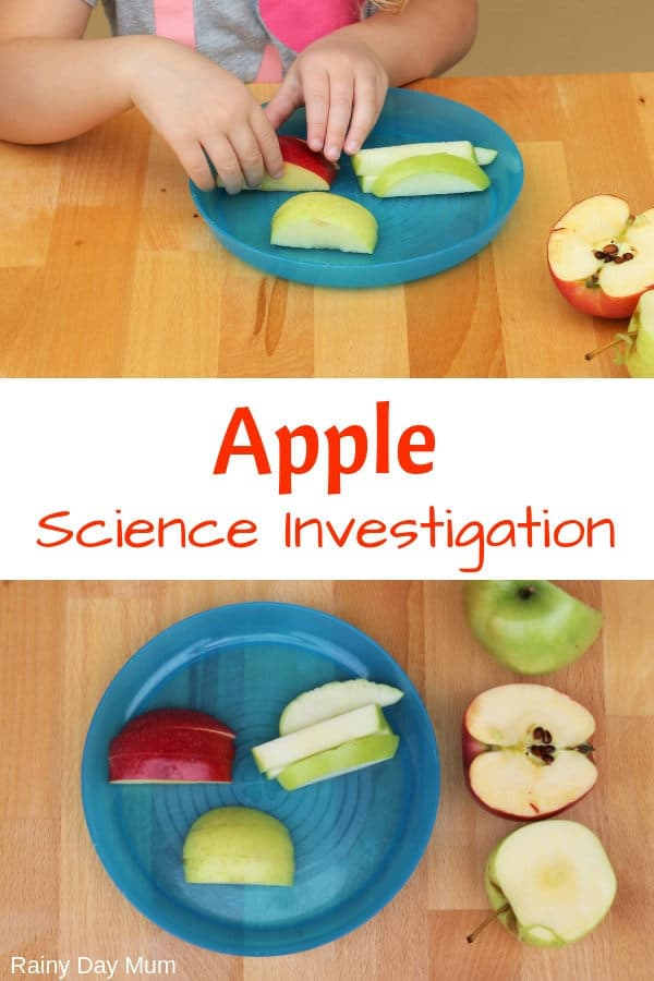 Easy preschool science experiment for apple themed week or when exploring the body and the 5 senses with data sheet to download to explore apples.
