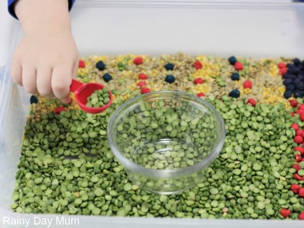 Preschoolers measuring and pouring dried peas in a Very Hungry Caterpillar inspired sensory bin