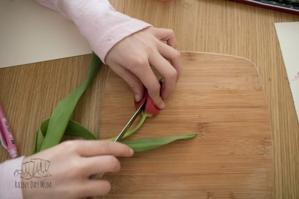 dissecting spring flowers from bulb for nature study