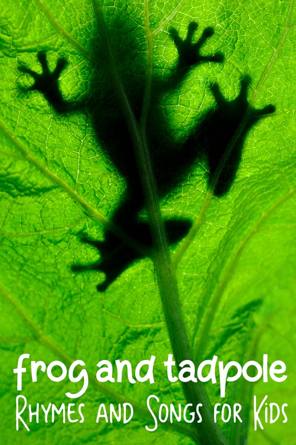 frog on a leaf with frog and tadpoles rhymes and songs for kids