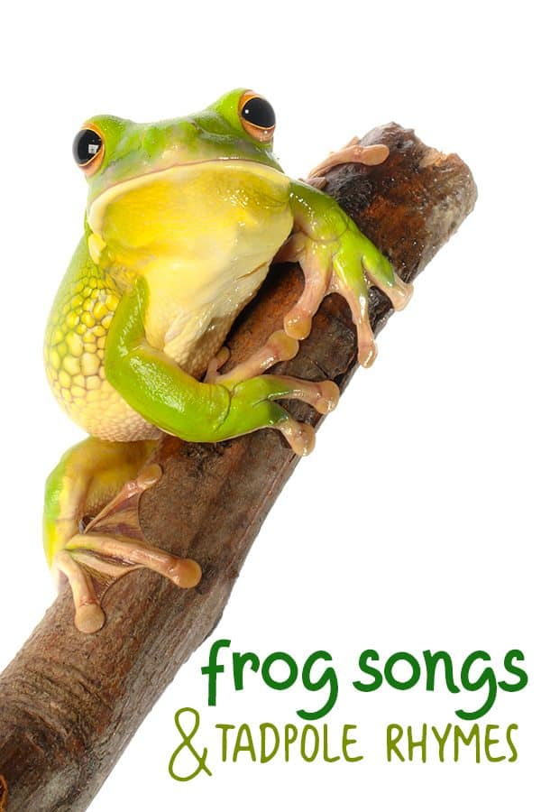 frog songs and tadpole rhymes for kids