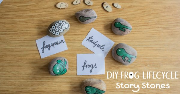 frog lifecycle story stones