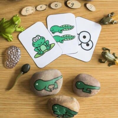 Frog and Tadpole Life Cycle Story Stones to Make for Kids