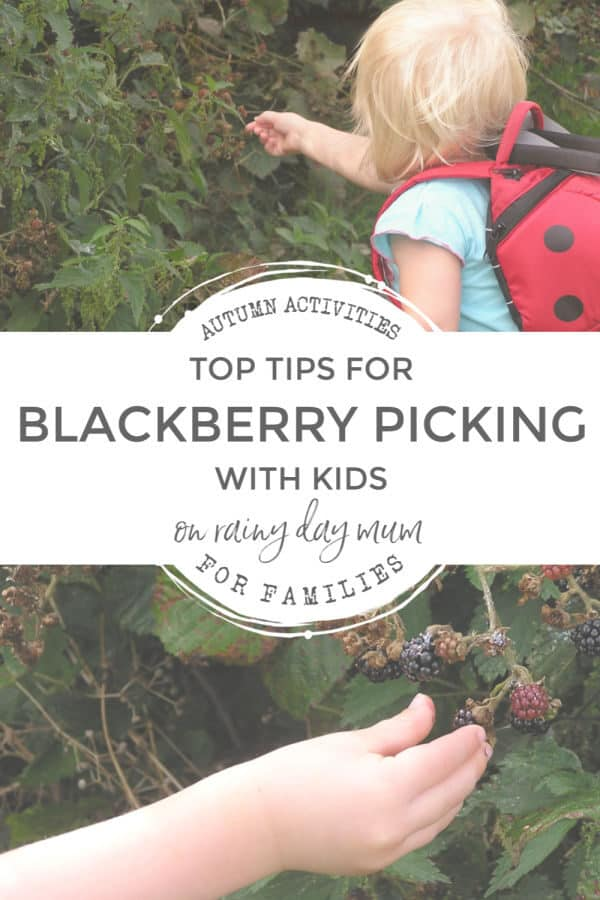 top tips for blackberry picking with kids