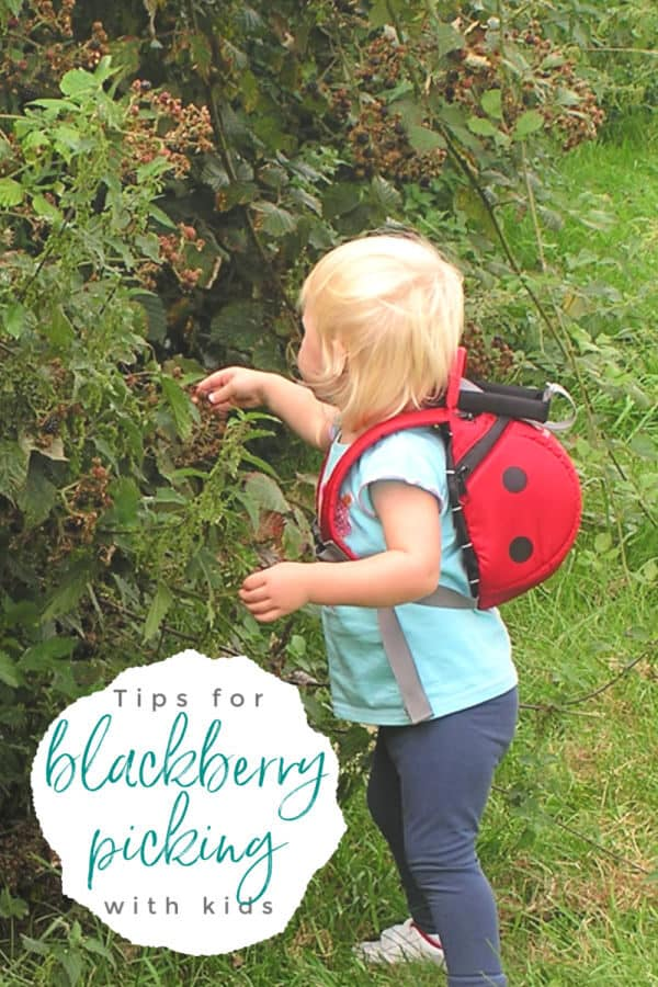 toddler picking blackberries text reads top tips blackberry picking with kids